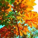 """""""Morning Leaves"""" by lagarriga"""