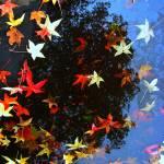 """""""Reflected Tree"""" by lagarriga"""