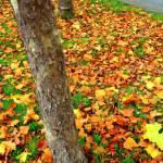 """""""Autumn Ground"""" by lagarriga"""