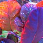 """""""Watered Leaves"""" by lagarriga"""