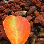 """Leaf on Red Stones"" by lagarriga"