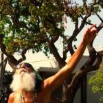 """Think Like A Tree, Dance Like Sunlight"" by lagarriga"