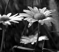 black-and-white-plants gallery