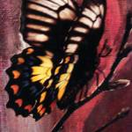 """butterfly on canvas 2"" by anitachamp"