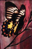 butterfly on canvas 2