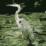 """GREAT BLUE HERON"" by RWA"
