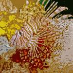 """LION FISH"" by RWA"