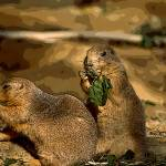 """PRARIE DOG PAIR"" by RWA"