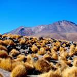 """""""Bolivian Desert"""" by VagabondVita"""