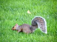 Squirrel at Play