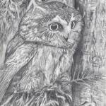 """Owl"" by adamwilson"