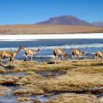 """""""Bolivian Desert VIII"""" by VagabondVita"""