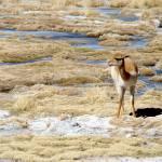"""""""Bolivian Desert IX"""" by VagabondVita"""