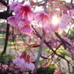 """Sunny Blossoms"" by VagabondVita"
