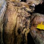"""""""Split log and leaf"""" by fjsjr"""