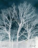 Ghost Tree 1