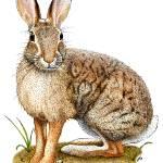 """Brush Rabbit"" by inkart"