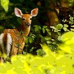 """THE YOUNG FAWN"" by RWA"
