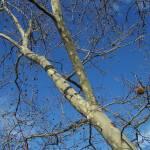 """""""Blue Tree"""" by JohnEdwardThomasPhoto"""