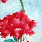 """Geraniums"" by anitachamp"