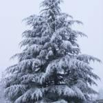 """""""Winter Majesty"""" by Attila_Photos"""