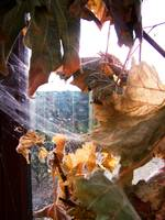 Autumn Cobwebs