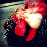 """""""Hungry Chicken"""" by NoemieSCC"""