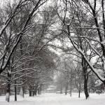 """Snow on Lafayette"" by heathermuro"