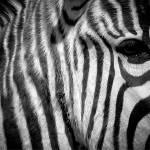 """Black and White"" by heathermuro"