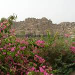 """Flowers at Philae"" by ChrisDorren"