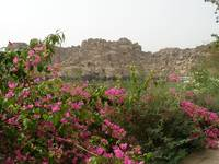 Flowers at Philae