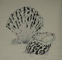 pen & ink shells 1