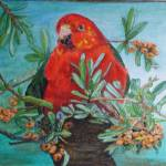 """King parrot"" by klynnmartell"