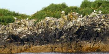 shore birds on coastal rocks