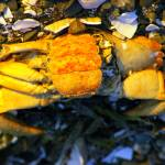 """crab carcass still life"" by wildethangs"