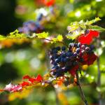 """""""sunkist wild blueish berries and red and green sti"""" by wildethangs"""