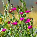 """""""pretty magenta weeds"""" by wildethangs"""