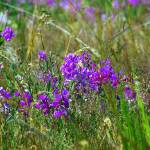 """""""pretty purple weeds"""" by wildethangs"""