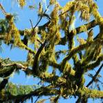 """""""mossy branches"""" by wildethangs"""
