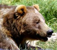 I'm such a good lookin bear