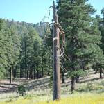 """Tall Dead Tree In Sunset Crater Valley"" by kristahackley"