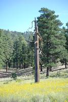 Tall Dead Tree In Sunset Crater Valley