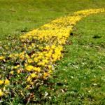 """""""Yellow Brick Road"""" by koivuneva"""