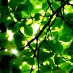 """""""Leaves"""" by koivuneva"""