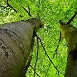 """""""Twin trees"""" by koivuneva"""