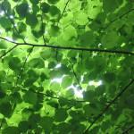 """""""foglie - parco maria callas"""" by steve-t"""