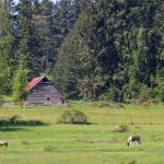 """""""rustic barn with black and white painted horse"""" by wildethangs"""