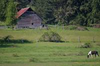 rustic barn and black and white painted pony