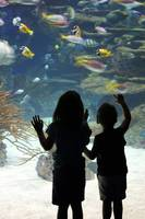 kids at aquarium