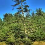"""""""0105 Ecola State Park Oregon"""" by vincentlouis"""